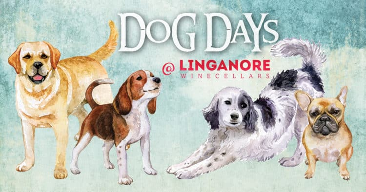 Dog-Days-Facebook-Image_Small