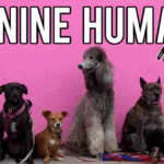 Canine-Humane-Fundraiser_1200-x-628_0E4EDC88-D883-4444-AD1BD31F9ED73594_8c0edea0-5a0c-44cb-ad18720b42d63764